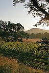 Oregon, Melrose Vineyard, Umpqua Valley wineries, South Umpqua River, sunrise over vines, tasting room,.