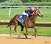 I'm A Chatterbox winning The Obeah Stakes at Delaware Park on 6/11/16