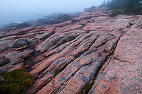 Pink granite on Ocean Path along The rocky coast of Acadia National Park