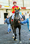 JANUARY 01, 2019 : Family Biz in post parade the Jerome Stakes for 3-year olds at Aqueduct Racetrack on January 01, 2019 in S. Ozone Park, NY.  Sue Kawczynski/ESW/CSM