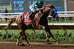 """DEL MAR, CA  AUGUST 25:   #1 Catalina Cruiser, ridden by Drayden Van Dyke, in the stretch of the Pat O'Brien Stakes (Grade ll), Breeders' Cup """"Win and You're In Dirt Mile Division"""" on August 25, 2018 at Del Mar Thoroughbred Club in Del Mar, CA.(Photo by Casey Phillips/Eclipse Sportswire/Getty ImagesGetty Images"""