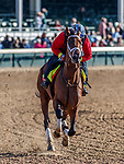 LOUISVILLE, KENTUCKY - MAY 02: State of Honor, owned by Conrad Farms and trained by Mark E. Casse, exercises in preparation for the Kentucky Derby at Churchill Downs on May 2, 2017 in Louisville, Kentucky. (Photo by Jesse Caris/Eclipse Sportswire/Getty Images)