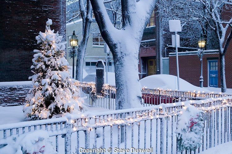 Snow, Bay Village, Boston, MA winter Christmas tree