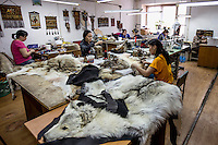 Women preparing wolf skins, for the clothing and rug making trade, at the government-owned Sakha Bult sorting facility.