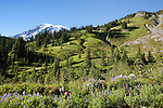 From Mazama Ridge along the Skyline Trail above the Paradise River in Mt. Rainier National Park, wildflowers provide foreground for ridges flanking alpine slopes of Mt. Rainier.