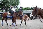 June 4, 2015: American Pharoah, trained by Bob Baffert, walks off the track after morning workouts in preparation for the 147th running of the Belmont Stakes in Elmont, New York. Jon Durr/ESW/CSM