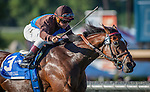 """September 26, 2015: Photo Call (IRE) with Drayden Van Dyke up win the Breeders' Cup """"Win and You're In"""" Rodeo Drive Stakes at Santa Anita Park in Arcadia, California. Zoe Metz/ESW/CSM"""