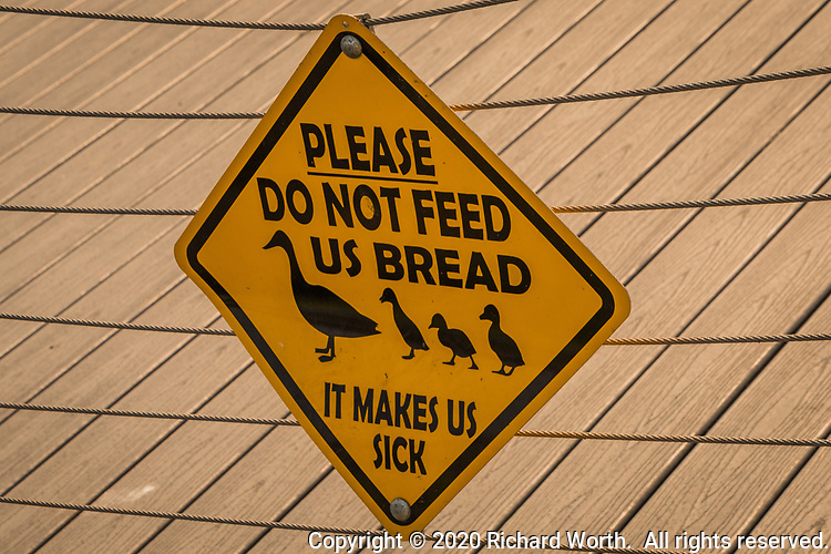 """At a neighborhood park that hosts ducks, geese, gulls, coots, egrets and more, a warning sign  pleads, """"PLEASE Do not feed us bread.  It makes us sick."""""""