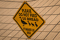 "At a neighborhood park that hosts ducks, geese, gulls, coots, egrets and more, a warning sign  pleads, ""PLEASE Do not feed us bread.  It makes us sick."""