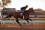 November 4, 2020: Leinster, trained by trainer George R. Arnold II, exercises in preparation for the Breeders' Cup Turf Sprint at Keeneland Racetrack in Lexington, Kentucky on November 4, 2020. Gabriella Audi/Eclipse Sportswire/Breeder's Cup/CSM