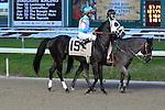 January 16, 2016: Tom's Ready with Shaun Bridgmohan up in the Lecomte Stakes in New Orleans Louisiana. Steve Dalmado/ESW/CSM