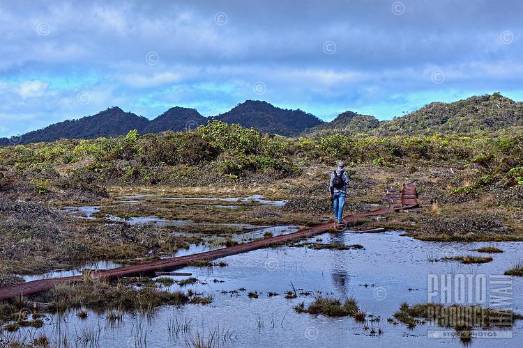 A hiker uses a boardwalk on the Alaka'i Swamp Trail, Kaua'i.