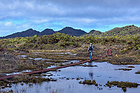 A hiker uses a boardwalk on the Alaka'i Swamp Trail, Kaua'i.