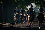 Horses walk the path to the track at Belmont Park in Elmont, New York on June 8, 2012.