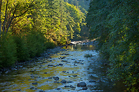 Sol Duc River on Merrill Ring property.  Olympic Peninsula, Washington.  Sept.  Morning.