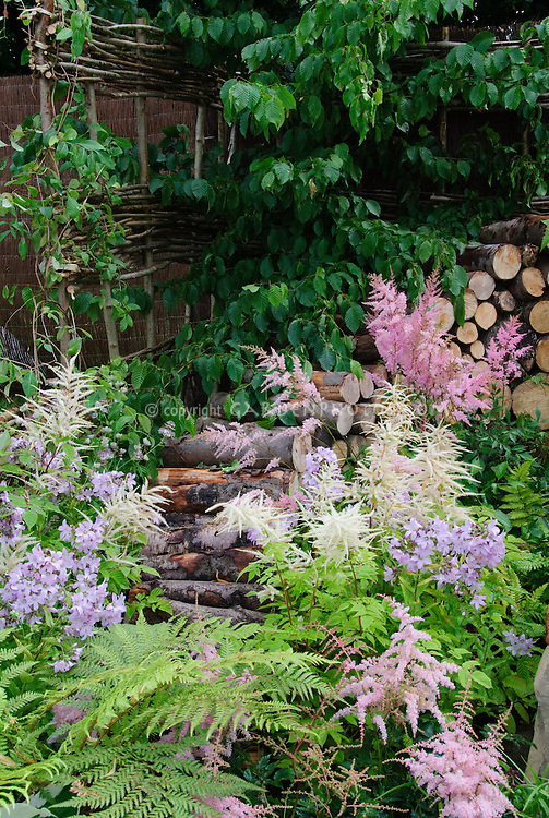 Old-fashioned and heirloom flowering plants, astilbe, phlox. Firewood cut logs with flowering spring plants, ferns, dogwood tree, willow fence, in late spring early summer flower garden