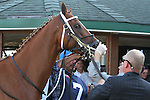 September 20, 2014: Tapiture has his lip tattoo read after entering the paddock for the Grade II Pennsylvania Derby at Parx Racing in Bensalem, PA.  Joan Fairman Kanes/ESW/CSM