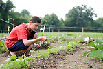PLYMOUTH, CT-3 July 2014-070314EC11--   Nick Piper, 13, tends to his family's garden at the Plymouth Community Garden, which is along Tremco Drive. This is the first year of the garden and each plot is well taken care of. Erin Covey Republican-American