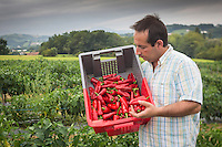 France, Aquitaine, Pyrénées-Atlantiques, Pays Basque, Espelette piment d'Espelette,    Ramuntxo Pochelu récolte ses piments d'Espelette , L'Atelier du Piment  //  France, Pyrenees Atlantiques, Basque Country, Espelette : Espelette pepper Harvested by hand, Ramuntxo Pochelu, L'Atelier du Piment