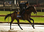 November 01, 2018 : Game Winner in preparation for the Breeders' Cup on November 01, 2018 in Louisville, KY.  Candice Chavez/ESW/CSM
