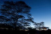 Twilight with moon and acacia tree, Soysambu Ranch, Great Rift Valley, Kenya
