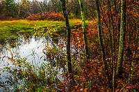 Vernal pond in autumn at the Wilton Park And Preserve in Saratoga County in New York State