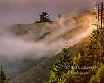 Coastal Fog, Bolinas Ridge, Mount Tamalpais State Park, Golden Gate National Recreation Area, Marin County, California