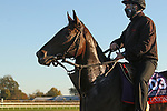 Civil Union, trained by trainer Claude R. McGaughey III, exercises in preparation for the Breeders' Cup Filly & Mare Turf at Keeneland Racetrack in Lexington, Kentucky on November 4, 2020.