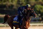 OCT 29: Breeders' Cup Distaff entrant Blue Prize, trained by Ignacio Correas, gallops at Santa Anita Park in Arcadia, California on Oct 29, 2019. Evers/Eclipse Sportswire/Breeders' Cup