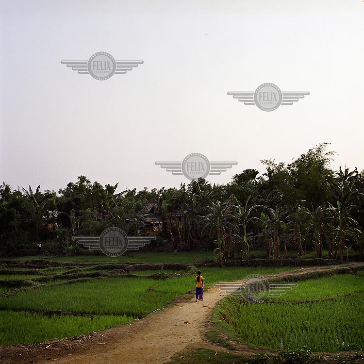 Rice fields in Beldangi 1 Bhutanese refugee camp...
