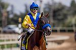 September 30 2018 : Vale Dori and Joe Talamo win the Zenyatta Stakes at Santa Anita Park on September 30, 2018 in Arcadia, California. Evers/ESW/CSM