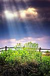 God ray sunbeams light up bush in Cherry Creek State Park near Denver, Colorado