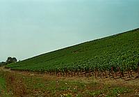 Chablis: Blanchot, grand cru vineyard