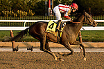 January 2 2016: Flexibility with Irad Ortiz Jr. win the 146th running of the Grade III Jerome Stakes for 3-year olds, going 1 mile & 70 yards at Aqueduct Racetrak.  Trainer Chad C. Brown. Owner Klaravich Stables & William H. Lawrence. Sue Kawczynski/ESW/CSM