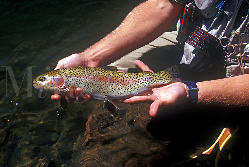 Rainbow Trout caught and released on the Frying Pan River in Basalt, Colorado