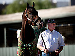 OCT 30: Omaha Beach with trainer Richard Mandella at Santa Anita Park in Arcadia, California on Oct 30, 2019. Evers/Eclipse Sportswire/Breeders' Cup