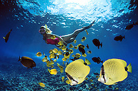 A woman (MR) freediving with miscellaneous reef fish. The two milletseed butterflyfish, Chaetodon miliaris (endemic) in the bottom right corner. Hawaii. Digital Composite.