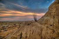 Single Ocatillo in Anza Borrego Desert.