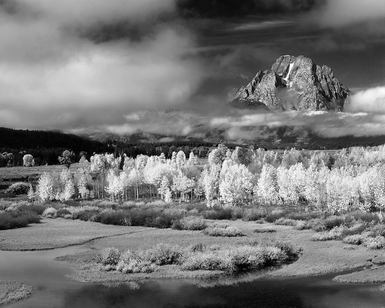 Morning light on Aspen trees along the Snake River below Mt. Moran as viewed from Oxbow Bend; Grand Teton National Park, WY