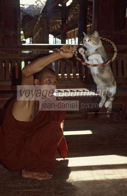 """Asie/Birmanie/Myanmar/Plateau Shan/Ywathit: Lac Inle - Monastère de """"Nga Phe Chaung"""" - Les chats sauteurs du monastère et le moine U Nanda"""
