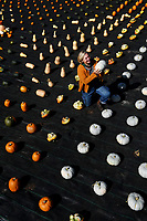 BNPS.co.uk (01202 558833)<br /> Pic: ZacharyCulpin/BNPS<br /> <br /> A geometric, colourful, autumn, harvest at Forde Abbey in Dorset.<br /> <br /> Pictured: Gardener Johanna Witts with a 'Crown Prince' pumpkin.<br /> <br /> An autumn harvest of squashes and pumpkins was laid out in a perfect uniform grid for visitors at the Forde Abbey Monastery on the Dorset/Somerset border.<br /> <br /> Forde Abbey is a former Cistercian monastery dating back to the early 12th century