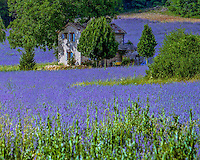 Provence and French Riviera