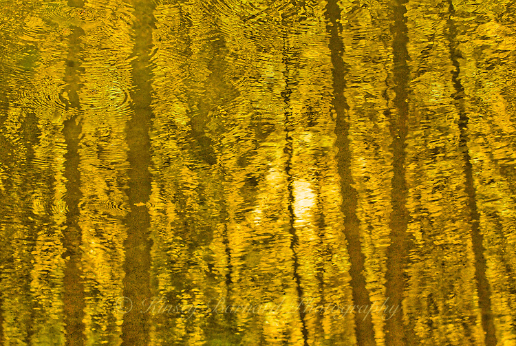"""""""AUTUMN GOLD""""<br /> <br /> Late afternoon autumn sun casts a golden glow upon the water of this Montana pond. ORIGINAL 24 X 36 GALLERY WRAPPED CANVAS SIGNED BY THE ARTIST $2,500. CONTACT FOR AVAILABILITY."""