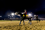October 30, 2018 : Roaring Lion comes off the track at Churchill Downs on October 30, 2018 in Louisville, Kentucky. Evers/ESW/CSM