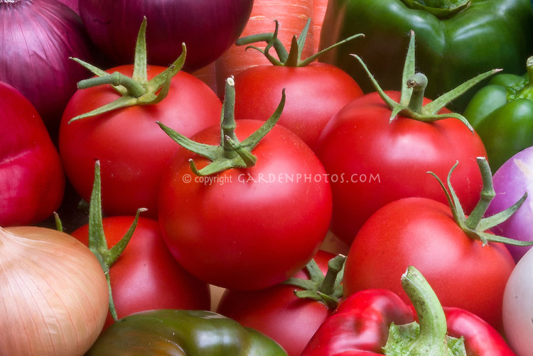 Tomatoes Gardener's Delight,Pepper Bell Boy, Onion Toughball, vegetables harvested picked autumn, Potatoes Kestrel, a mixture of bounty ripe red and green vegetables