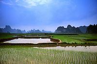 Colorful scenic of rice field Yangshou China