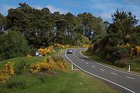 New Zealand.  Highway 5 Scene near Huka Falls, south of Rotorua.