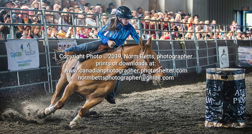 The year-end finals of the RAM Rodeo Tour in Newmarket, Ontario, Ontario, Canada <br /> October 18, 19 & 20th, 2019<br /> Norm Betts, photog<br /> normbetts@canadianphotographer.com<br /> Norm Betts, copyright©2019<br /> normbettsphotog@gmail.com<br /> 416 460 8743