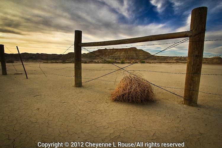Bisti Tumbleweed - New Mexico - Bisti Wilderness