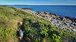 Our dogs love the Nature Conservancy's coastal path above the sea around Lane's Island.